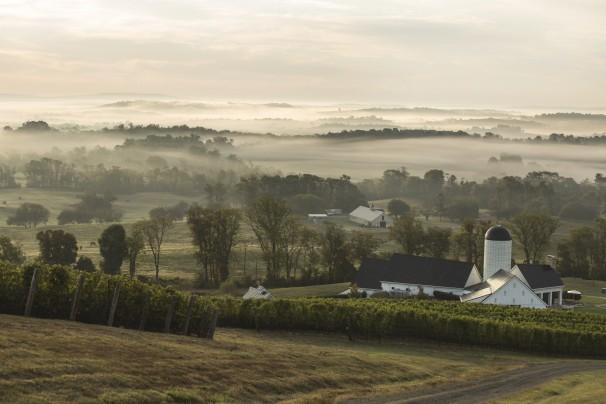 Virginia wine vineyard 2_washington post
